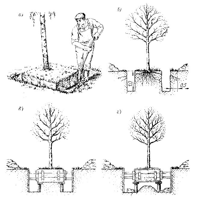 Посадка деревьев и кустарников реферат 6197