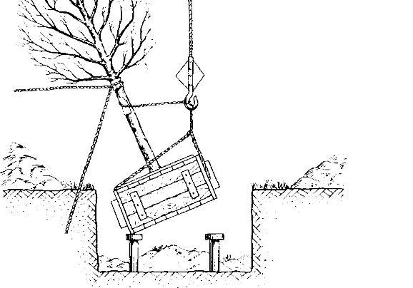 Нормативы затрат на выращивание деревьев кустарников 78
