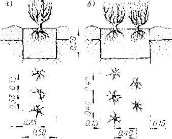 Нормативы затрат на выращивание деревьев кустарников 94