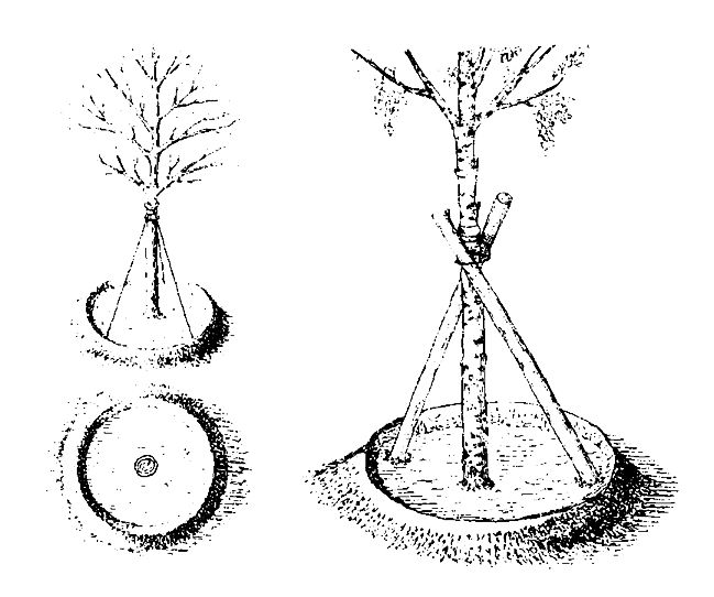 Нормативы затрат на выращивание деревьев кустарников 54