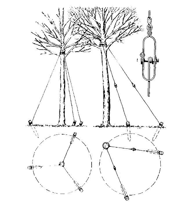 Для оттяжки крупных деревьев