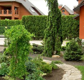 Изгородь может быть высокой шпалера